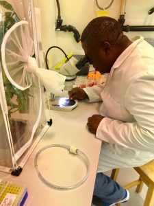 Mathias Tembo picking whiteflies under stereomicroscope for mtCO1 amplification