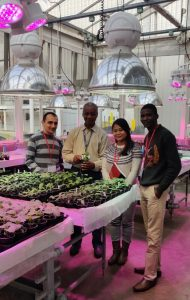 From L-R: Mohamad Halabi, Parinda Barua and John Oladokun at a practical session on the use of test plants as a biological tool for plant virus indexing, inside the glasshouse of Fera Science Limited with Stephen Forde (2nd from Left)
